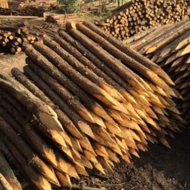 湖南楊木桿供應 園林綠化樹木支撐量大從優