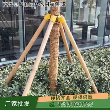 【厚勤】樹木支撐架采購供應 山東樹木支撐架套杯價格